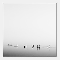 Cormorants at dusk (_ Nemo _) Tags: comacchio ferrara italy historical onthewater water sony ilce7r contax vintagelens manual planar 135mm 1352 f20 f8 nature lagoon valley cormorants bw bn square squared minimal