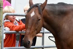 Horse (Aark) (stinkenroboter) Tags: aarkwildliferehabilitationandeducationcenter hourse