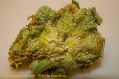 ZellysGift-1 (sht_photography) Tags: mmjcanada zelly bud marijuana nugporn pot strain strains
