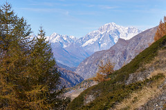 Monte Bianco (Marco MCMLXXVI) Tags: cogne aosta valle montebianco alps alpi mountain montagna nature natura mountainpeak ridge cliffs granite rock rockformation iced snow summit outdoor vista view panorama trekking hiking escursionismo fall autumn autunno colors blue sky travel tourism mountaineering trees sony ilce6000 a6000 pz1650 italy europe landscape mountainside canyon glacier scenery