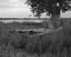 CO2016-P67-TX400-659 (eagle112800) Tags: pentax 67 film tx400 blackandwhite mediumformat medium landscape natuer nature colorado