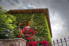 Ivy house (alejo.365shoots) Tags: green house ivy walls window garden sky 365