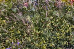 Flora Plenteous 73 (pni) Tags: flower plant grass multiexposure multipleexposure tripleexposure musiikkitalo musikhuset musiccentre helsinki helsingfors finland suomi pekkanikrus skrubu pni