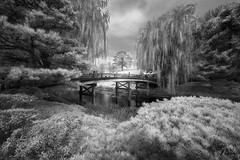 GARDEN OF EDEN (Nenad Spasojevic) Tags: white landscape monochrome japanesegarden illinois trees 2016 nenadspasojevic infrared sonyalpha drama wood naturallight gardenofeden botanicgarden blackandwhite black chicago bridge light fineart river il usa