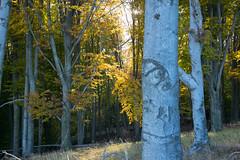 DSC_0312 (Pter_Szab) Tags: mtra matra hungary nature autumn colours mountains galyateto galyatet forest hiking nationalpark landscape