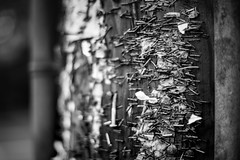 Stapled History (Isaac Hilman) Tags: bw staples rust poles shallow 50mm f14g nikon d800 cities time leftovers gritty dark grungy