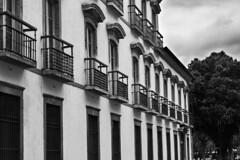 Pao Imperial, Rio de Janeiro (jadc01) Tags: arquitetura lugares predios riodejaneiro architecture colonialarchitecture baroque baroquebrazilian blackandwhite blackwhite balcony tree nikon d3200