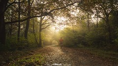 Sunday Morning Stroll. (5PR1NK5 Photography  Off The Beaten Track Urban) Tags: 5pr1nk5 photography canon capture candid nature uk surrey oxshott countyside landscape runner jogger light golden fog mist morning sunrise woodland autumn