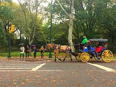 Horse & Carriage through Autumn rainy Central Park (dannydalypix) Tags: autumninnewyork centralpark newyork newyorkcity horseandcarriage centralparkinfall