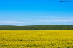 The garden route (David Pellicola) Tags: southafrica sud africa sudafrica nikon nikond810 d810 gardenroute