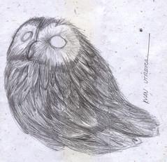 buho a lapicero (ivanutrera) Tags: draw dibujo drawing dibujoalapicero dibujoenboligrafo boligrafo animal ave bird pajaro pjaro owl buho bho sketch sketching ilustracion