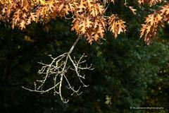 RXZ03308 (freudensammler) Tags: kloster monastery marialaach germany sony rx10iii rx10m3 freudensammler freudensammlerphotography ast autumn herbst ste