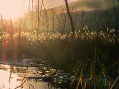 les pieds dans la glace et la tête au soleil matinal (christophebiget) Tags: eaux maraisdebsm plansdeauetlacs