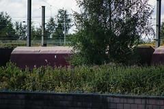 310481 Warrington Arpley 170916 (Dan86401) Tags: 310481 310 hta bogie coal hopper wagon freight thrall ews db dbcargo warringtonarpley