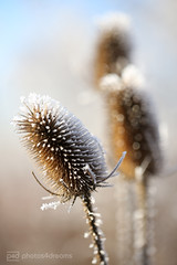 sunday morning 04.12.2016 -p4d- 046 (photos4dreams) Tags: sundaymorning04122016p4d winter photos4dreams p4d photos4dreamz photo rauhreif frosty rime hoarfrost walk sunny sonnenschein sonne