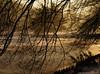Tervuren.Belgium (Natali Antonovich) Tags: tervuren belgium belgie belgique winter snow frost nature park christmasholidays christmas landscape tree