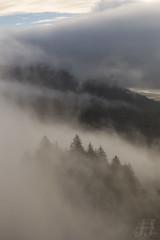 Mystic Forest (Joshua Johnston Photography) Tags: pacificnorthwest pnw joshuajohnston canon6d forest trees capehorn columbiarivergorge washington canonef2470mmf4lisusm