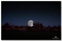 NOVEMBER 2016  NM1_1650_016381-222 (Nick and Karen Munroe) Tags: nickmunroe nikon nickandkarenmunroe nikon1424f28 nickandkaren karenick23 karenick karenandnickmunroe karenmunroe karenandnick munroedesignsphotography munroedesigns munroephotography munroe brampton beauty brilliant ontario outdoors canada fall fallcolors fallsplendor fallcolours supermoon moonlight moon moonlitsky moonsetting settingmoon daybreak dawn luna lunar nikon70200f28