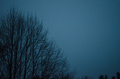Winter Cold (facundoroca) Tags: winter cold invierno frio blue azul celeste tiniebla arbol ramas cielo nikon d5100 cordoba argentina