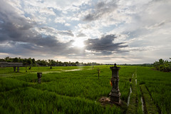 Sunbreak Over Rice Paddies, Bali Indonesia (AdamCohn) Tags: denpasar adamcohn bali indonesia seminyak ubud sunbeams wwwadamcohncom