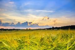(Tim Scholz) Tags: countryside sweet home 1200d eos canon sunset sonnenuntergang getreide bauer saarland land heimat