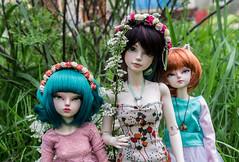 Alice with friends (- ) Tags: bjd msd iplehouse tania alicecatwell fairyland minifee woosoo effy marceline rheia