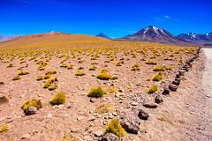 Chile 2013-2744 (sebtac) Tags: chile2013 chile 2013 outdoor reservanacionallosflamencos