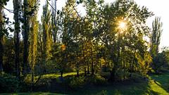 DSC_7498_HDR (sergeysemendyaev) Tags: 2016 russia krasnodar autumn fall     landscape scenery    sunset dusk sun  trees