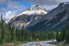 Scenic Drive In Canadian Rockies,  Icefields Parkway, Alberta, Canada (Feng Wei Photography) Tags: autumn color season rockymountains scenicdrive fall icefieldsparkway outdoor road horizontal travel forest scenic alberta landscape canada highway93 tourism canadianrockies scenery banffnationalpark ca
