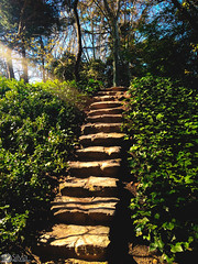 The stairs of nature (silvia_photog) Tags: stairs nature park green