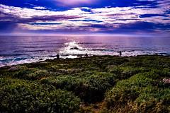 West Coast Sunset (laurenspies) Tags: cambria california unitedstates us usa ca cali sunset pacific pacificocean shore landscape
