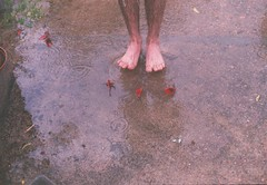 """I was dancing in the rain, I felt alive and I can't complain."" (Hijo de la Tierra.) Tags: film analog vintage 35mm old rainyday feet legs ceibo flowers spring south uruguay water life boy drops"