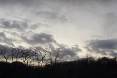 Above the Fray (JenGallardo) Tags: helicopter newyork newyorkcity ny nyc winter unitedstates inwood park inwoodhillpark