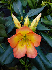 Nature's Composition (Steve Taylor (Photography)) Tags: green orange yellow singapore asia plant flower flora leaves