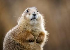 Groundhog (Hans van der Boom) Tags: netherlands zoo rotterdam blijdorp nederland nl ultra sweep zuidholland diergaarde friendlychallenges gamex2 herowinner ultraherowinner gamex3winner gamex2sweepwinner pregamewinner gamesweepwinner perpetualwinner