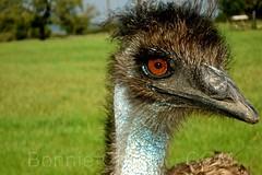 Emu See You