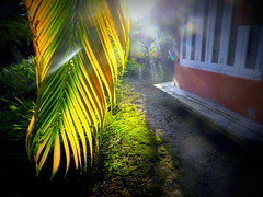 After The Rain (Biswajit Dihidar) Tags: windows light sunset color green palm lomoish