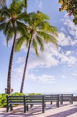 Peek-a-Boo (jaqxno) Tags: trees vacation mountains beach nature palms hawaii waikiki palmtrees ohua