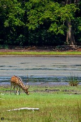 Vilpaththu wild life1