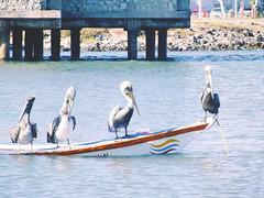 Cumaná 010: La Toma (TheLuisX) Tags: paisajes naturaleza beach americalatina america botes mar barcos venezuela playa american vista animales paraiso ven oceano sucre bote caribe venezuelan aminal cumana tropico pelicanos chevere cumaná