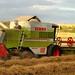 Baldock Harvest 2014