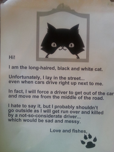 Does your cat have a death wish?