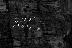 Blue Mountains, Australia (nschmidtkamp) Tags: travel viaje wild cliff naturaleza holiday mountains blancoynegro nature birds contrast trekking fly flying rocks walk favorites australia aves bluemountains views contraste comments acantilado rocas montaas vuelo