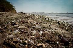 Dead Horse Bay (Kristen Palatella) Tags: blue ny newyork beach nature water glass brooklyn trash landscape found bay bottle garbage waves treasure bottles foundart landfill deadhorsebay
