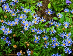 Blue Beauty (Stanley Zimny (Thank You for 16 Million views)) Tags: blue flower beauty nj skylands