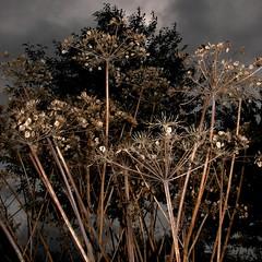TERRA INCOGNITA (Grant Simon Rogers) Tags: leica leicadigilux2 000 aftertherain camberwell soaking walworth dayfornight wetfeet burgesspark susurrus susu