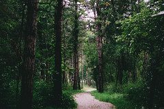 (Austin | Johnson) Tags: blue trees portrait green nature 35mm landscape nikon jester iowa rainy jesterpark 18105mm d7100 axstin axstinphoto