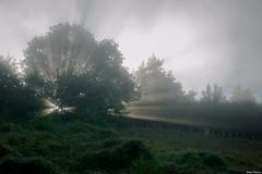UFO ? (Jérôme Cousin) Tags: sun tree sunrise soleil nikon 28 tamron arbre 2470 d700