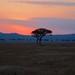 African safari, Aug 2014 - 062