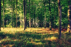 Forest Views (Crisp-13) Tags: wood trees tree forest denmark danish trunk